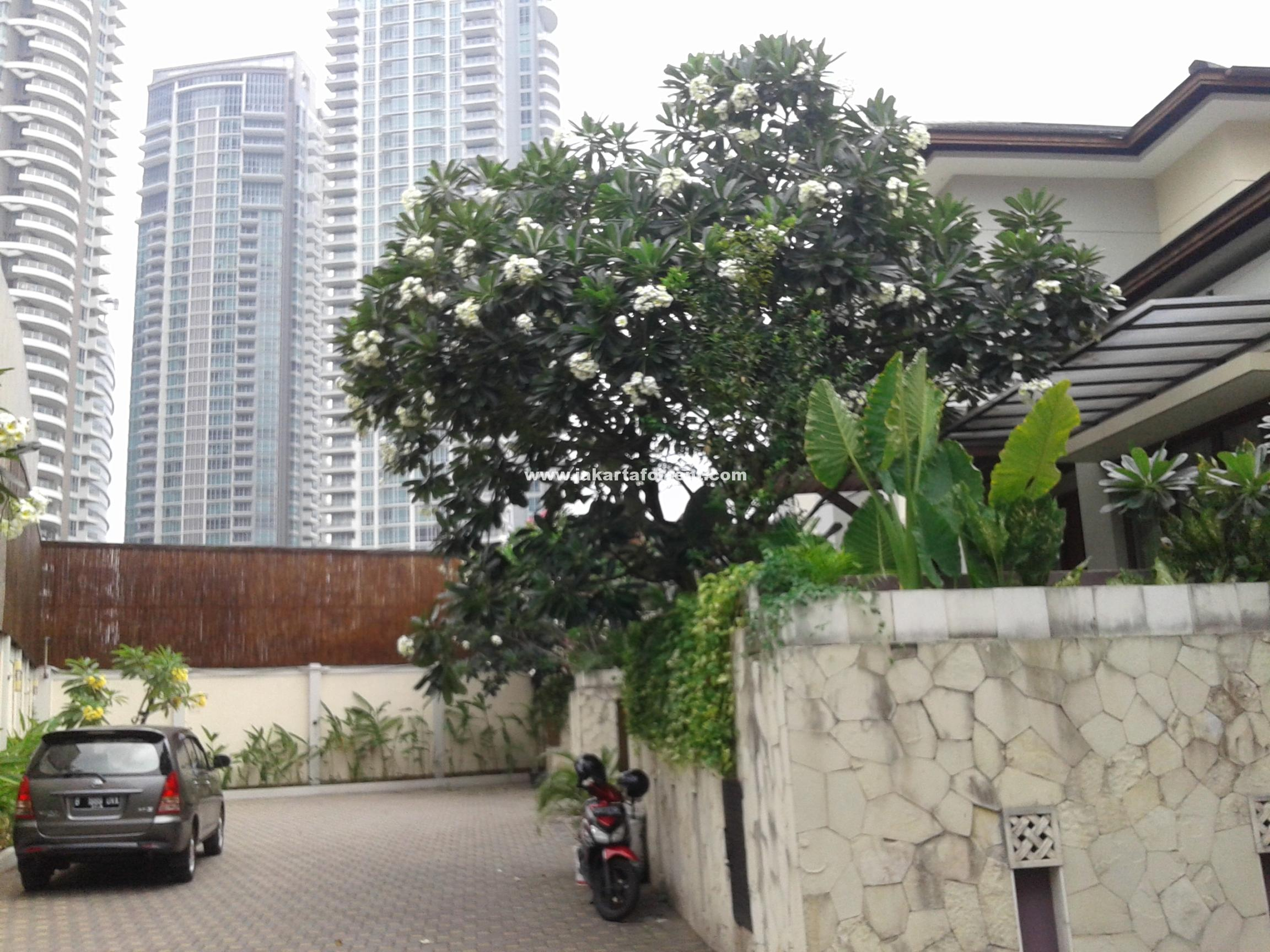 Nice modern house in an expatriate compound in kemang area must see
